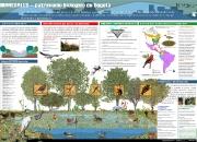 Infografía sobre el sistema de humedales de Colombia