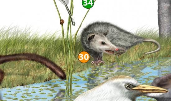 4. Detalle de una infografía que utiliza como recurso gráfico la ilustración científica.